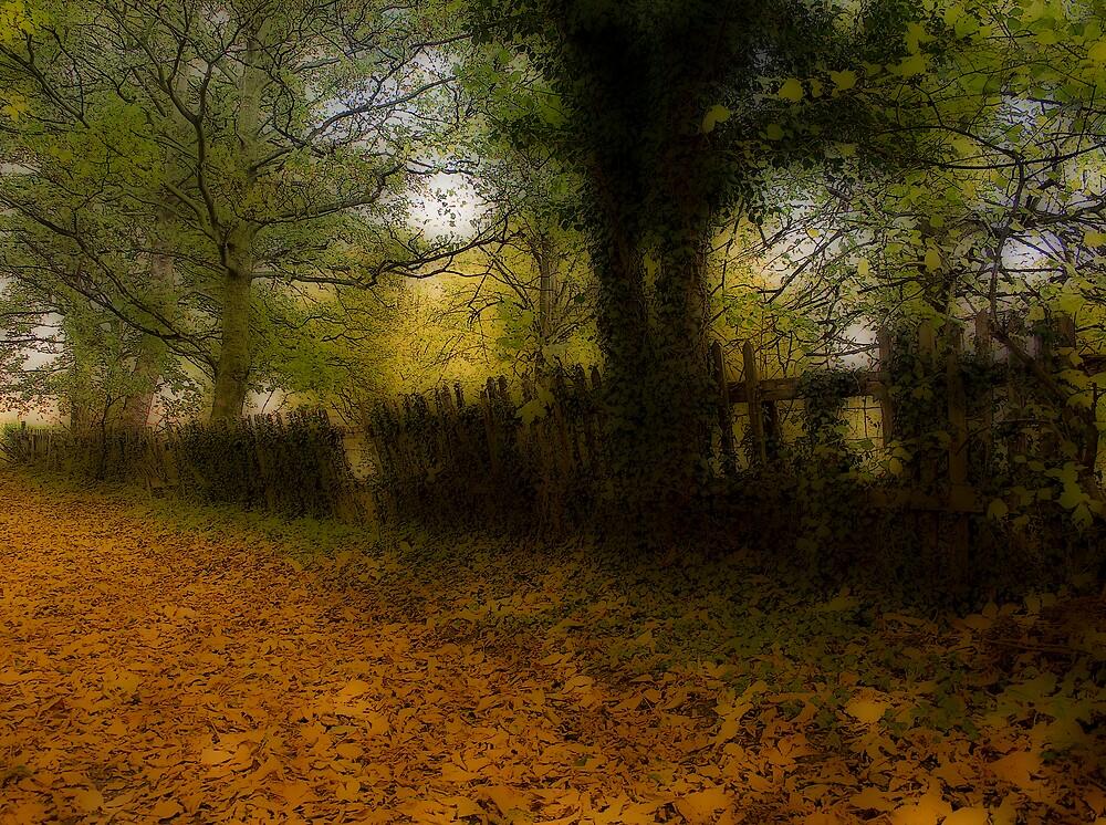 The rickety fence by Martyn Starkey