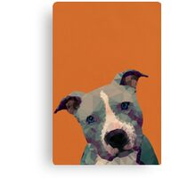 Pitbull Canvas Print