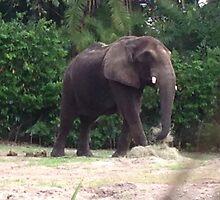 Elephant  by Kalileu