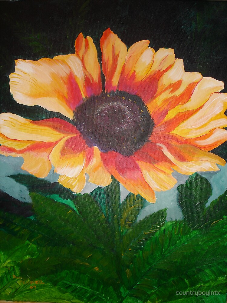 painted daisies  by countryboyintx