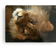 The Cute Look Metal Print