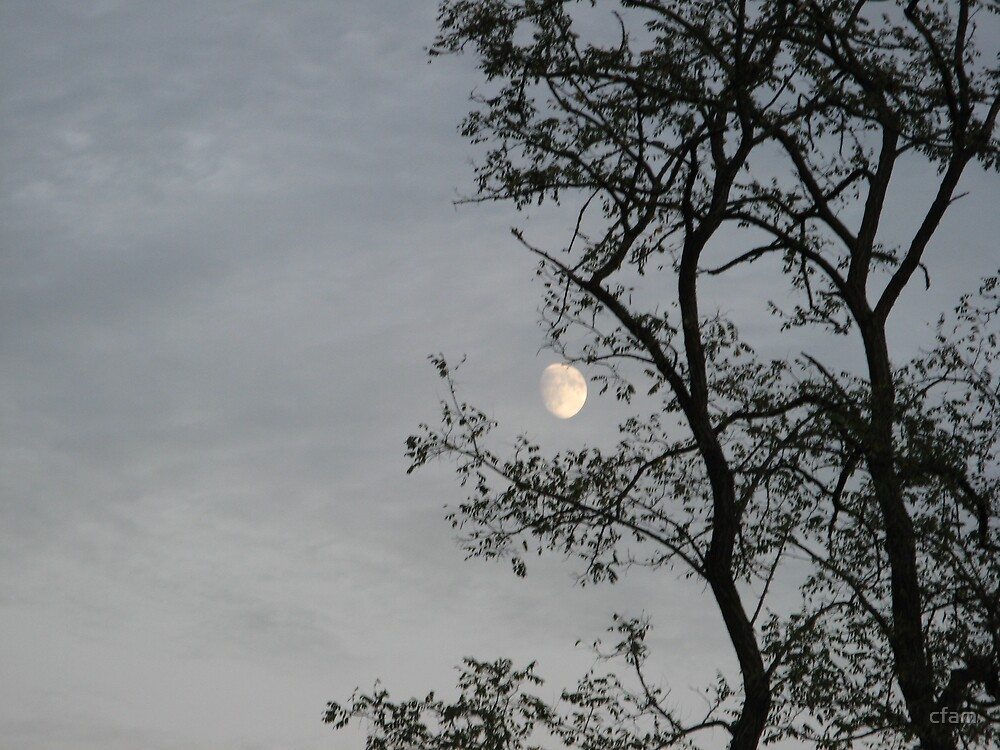 Moon behind the trees by cfam