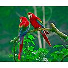 Parrot Love by Tony  Bazidlo