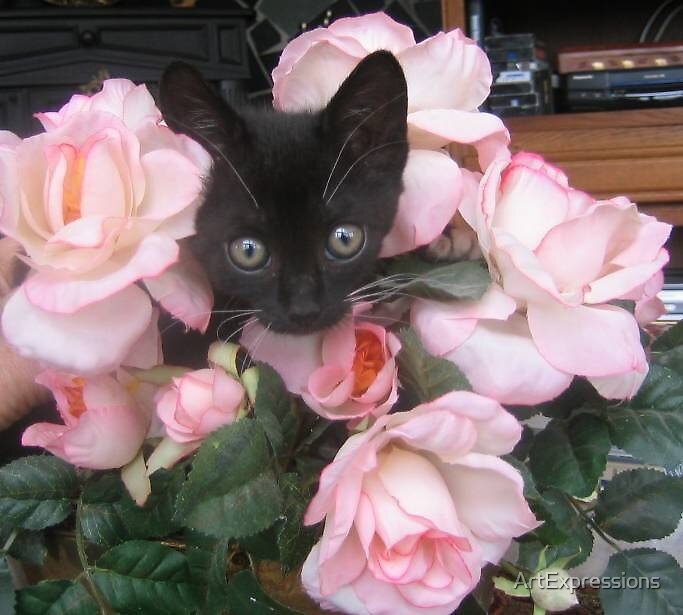 Roses and a kitty for mom? by ArtExpressions