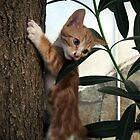 Turkish Cat by Stuart  Milton