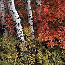 Autumn Scene by mymamiya