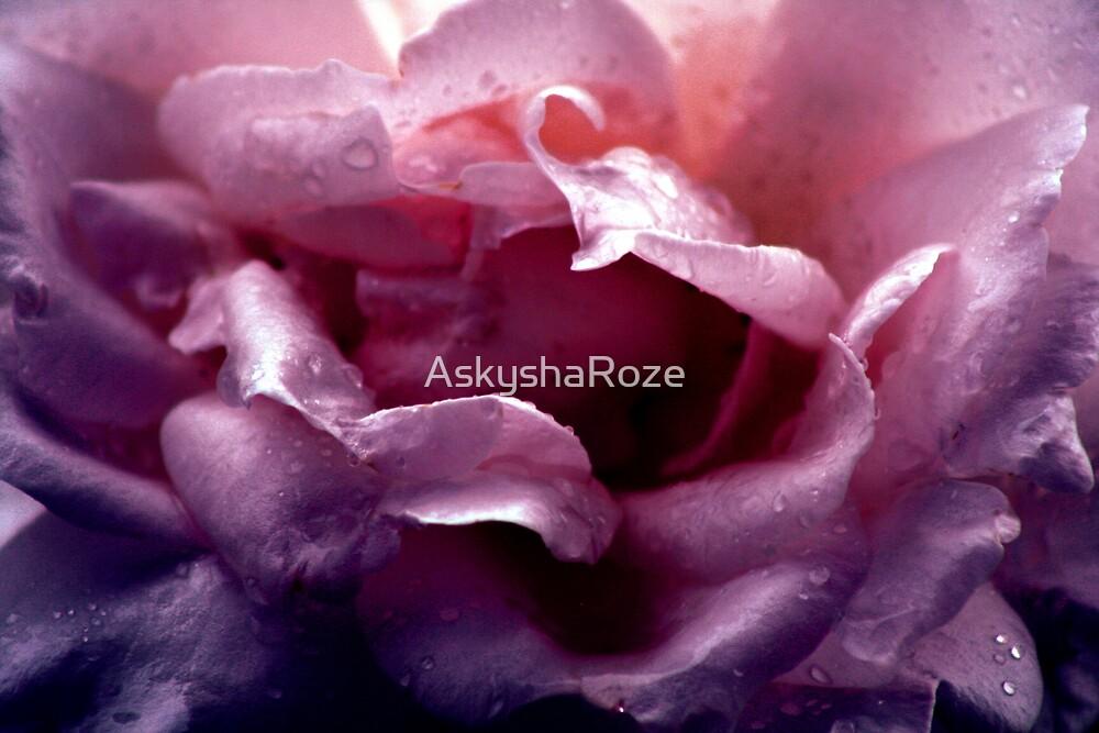 Rose Petals by Kylie  Metz