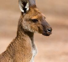 Roo Portrait by DawsonImages