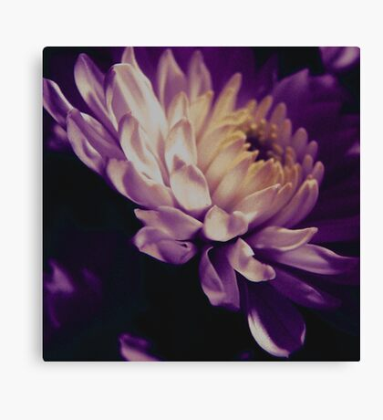 A Passion for Purple Canvas Print
