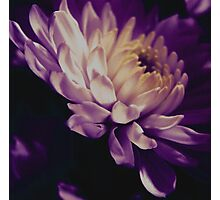 A Passion for Purple Photographic Print