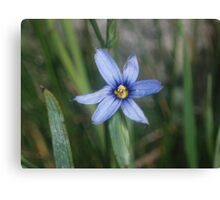 Price Lake, NC Flower Canvas Print