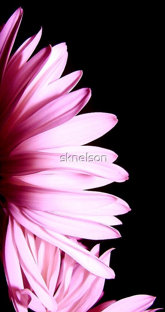 Fan Dancer by sknelson