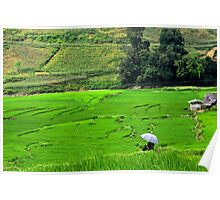 An Umbrella in a Green Sea - Sa pa, Vietnam. Poster