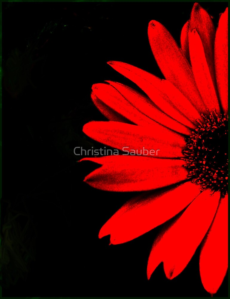 Red Gerbera Daisy by Christina Sauber