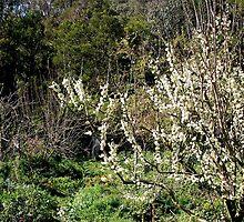 Orchard Path Collingwood Children's Farm by Helen  Dawson
