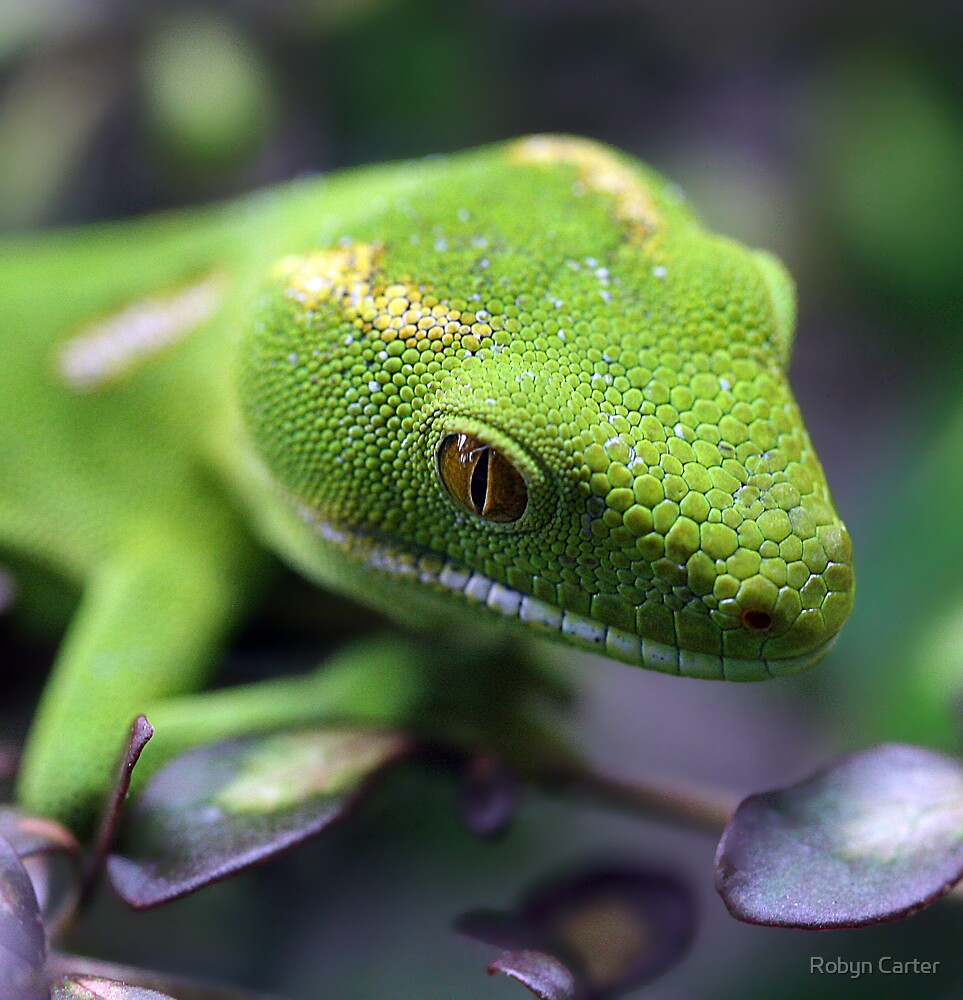 Gecko by Robyn Carter