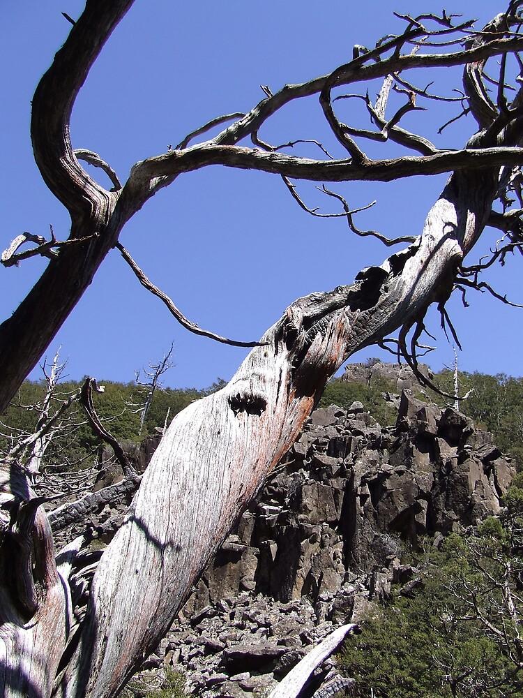 Twisted Tree by Samara  Lee