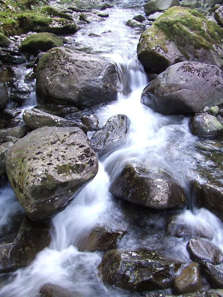 Green Moss Creek by Samara  Lee