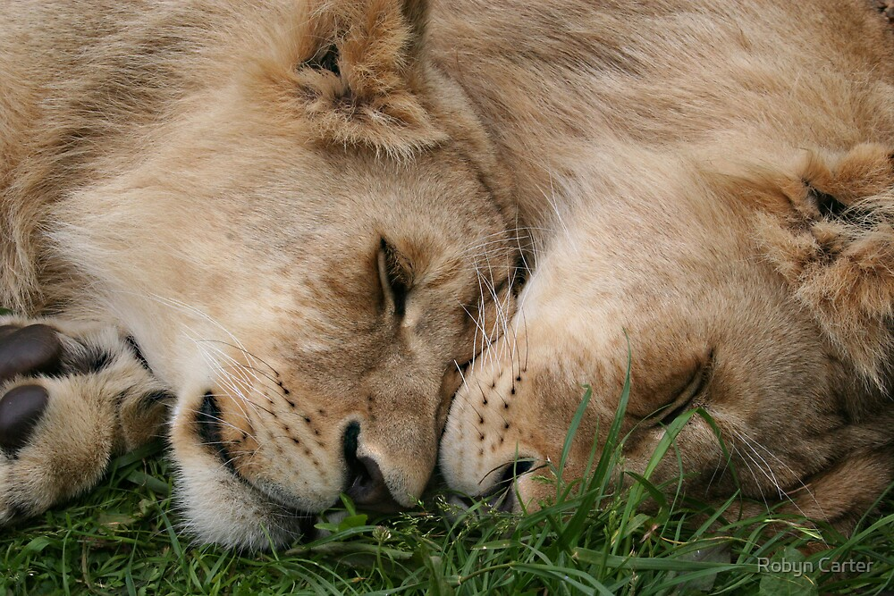 Cub Love by Robyn Carter