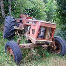 Old Red Tractor - Zetor by Margaret Zita Coughlan