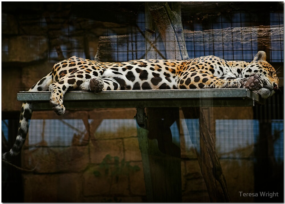 Dreaming by Teresa Wright