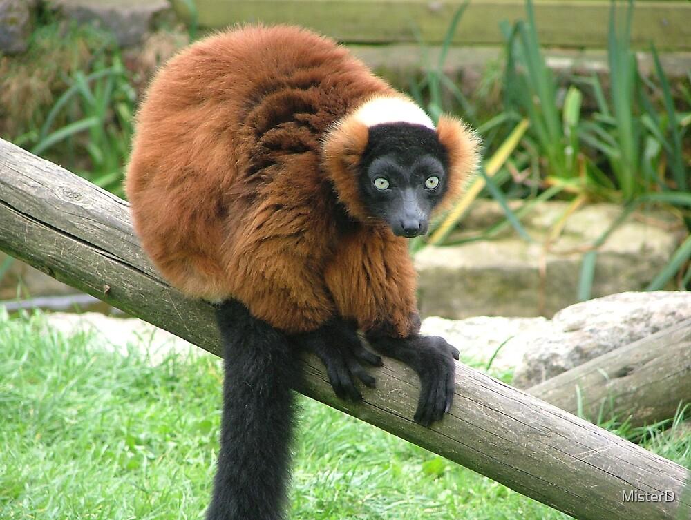 Madagascan lemur_1 by MisterD