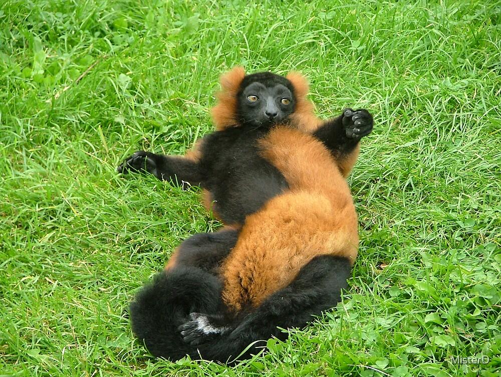 Madagascan lemur_3 by MisterD