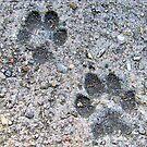 Paws Mark The Spot by Suni Pruett
