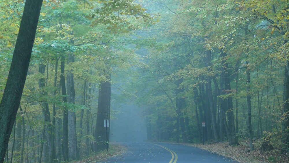 Misty fall morning by Nina Andrews