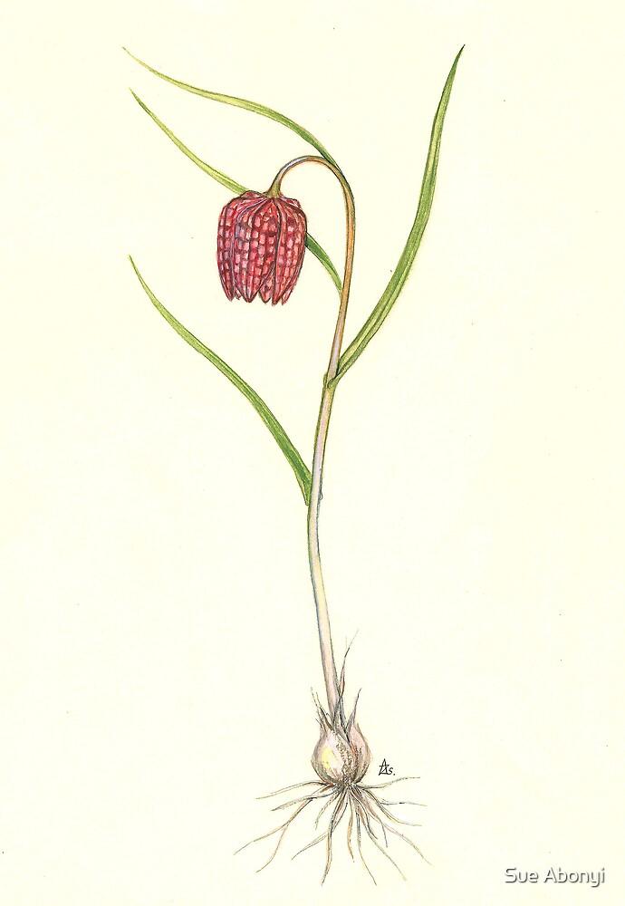 Snake's Head Fritillary  - Fritillaria meleagris by Sue Abonyi