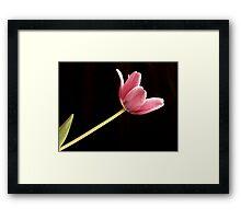 Light Seeker Framed Print