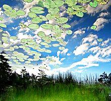 dream sky by Cornelia Togea