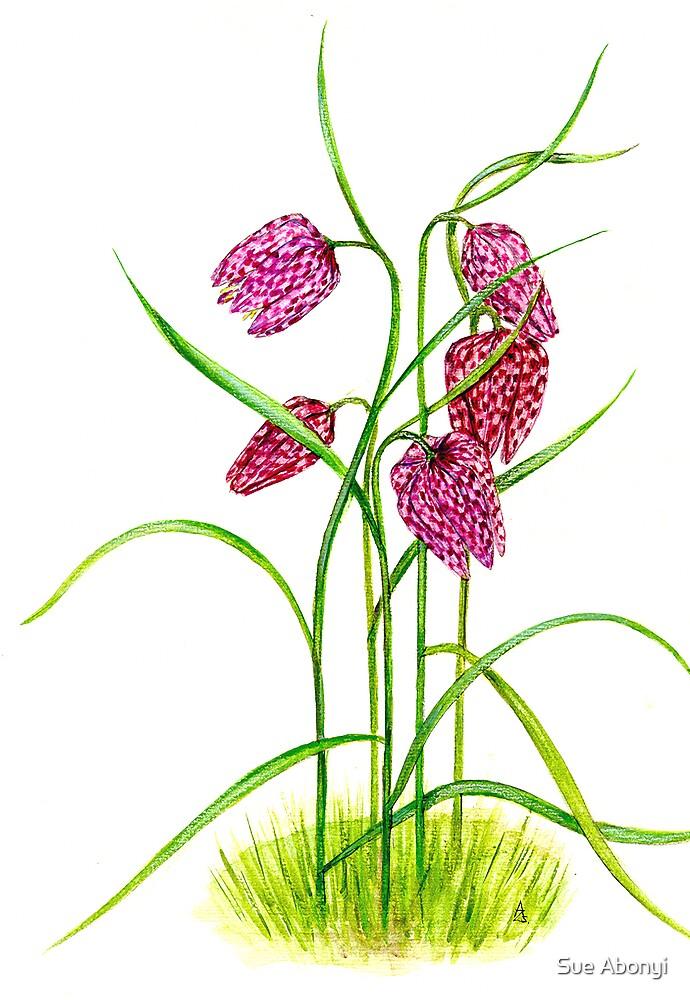 Leper Lily - Fritillaria meleagris by Sue Abonyi
