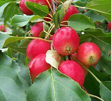 Red Applets by Gene Cyr