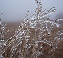 Ice on Wheat by JLTaft