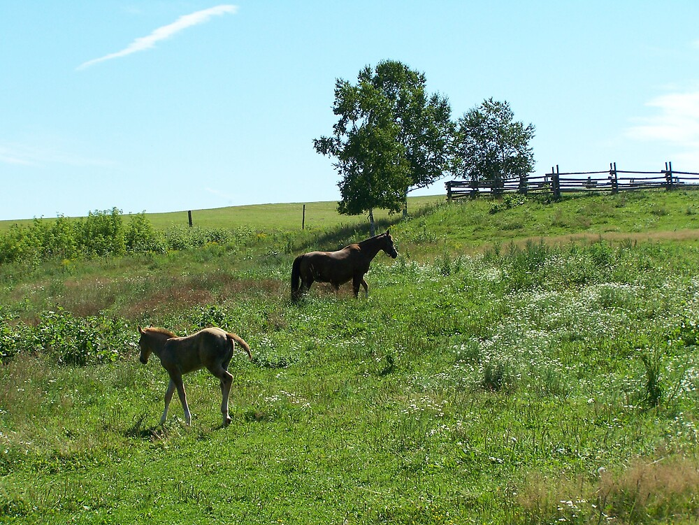 Horses by Gene Cyr