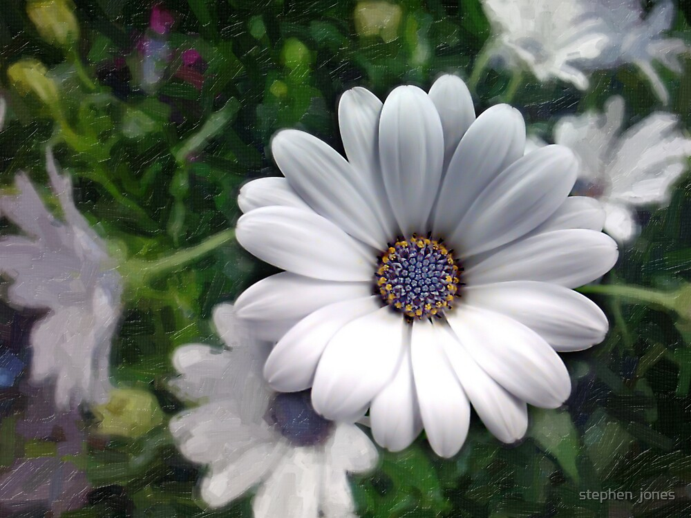 whiteflower by stephen  jones
