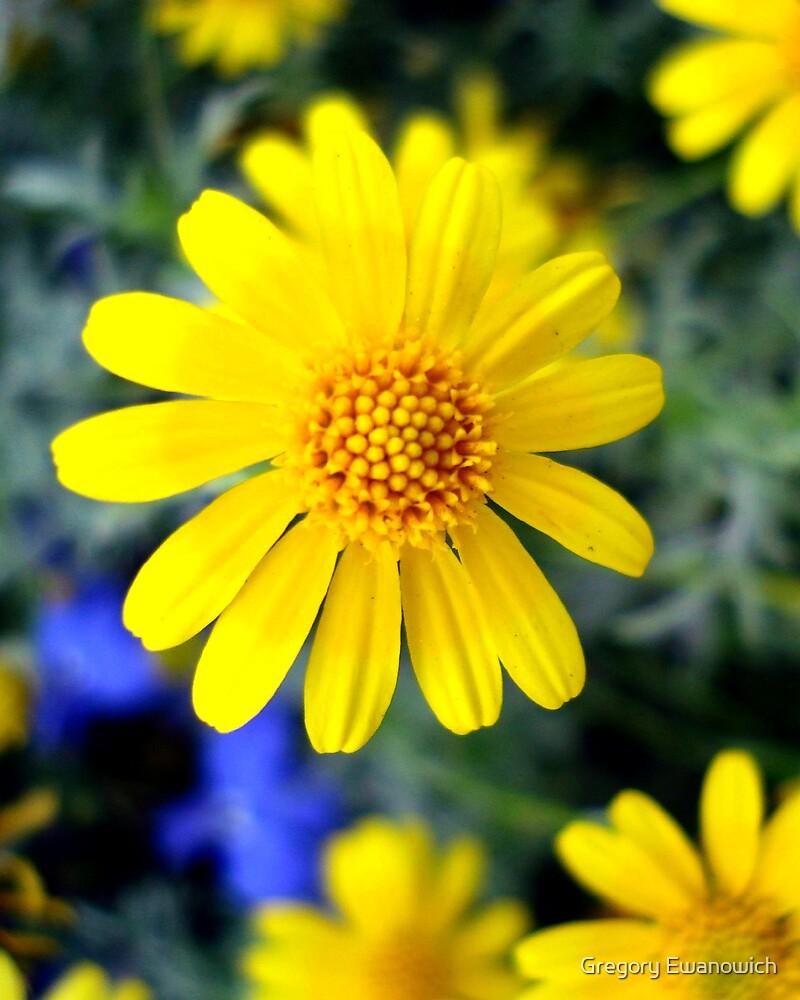 Yellow Daisie by Gregory Ewanowich