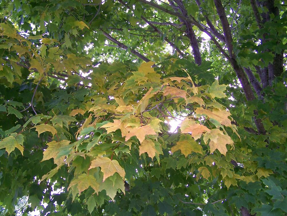 Autumn Changes by Gene Cyr