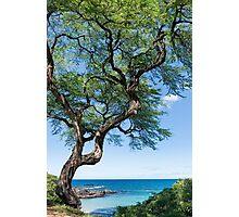 Serenity Tree Photographic Print
