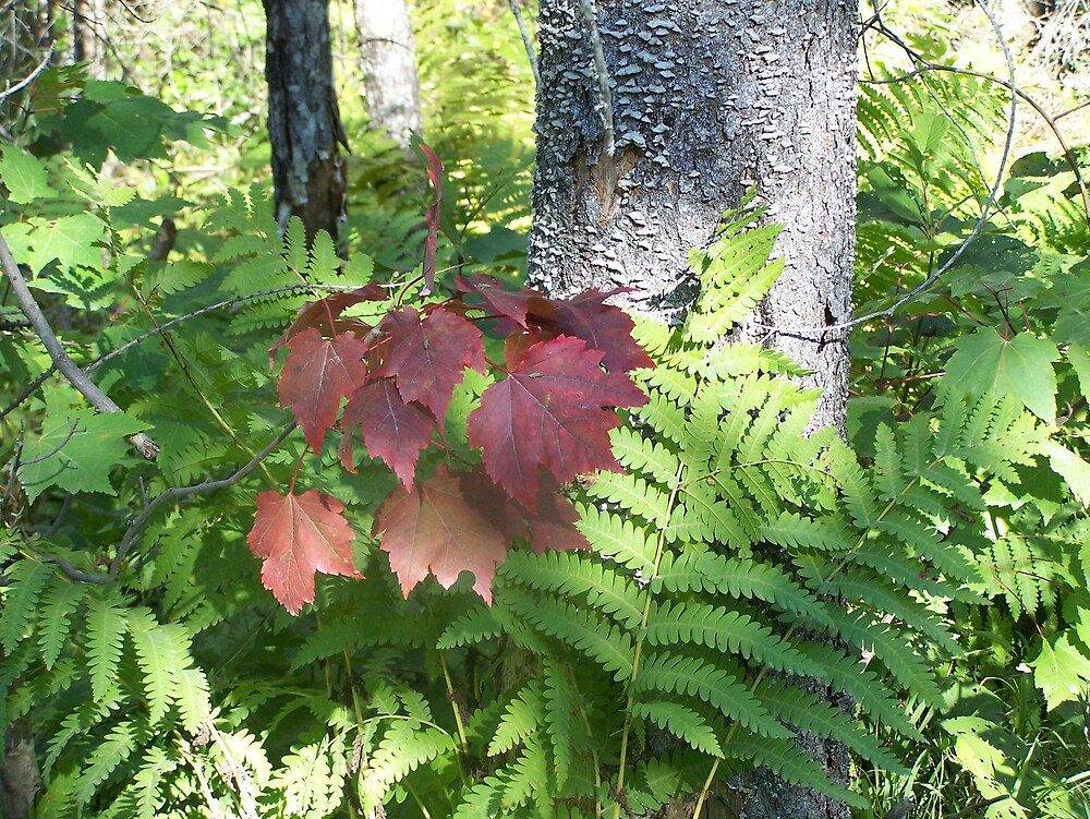 Autumn Ferns & Leaves by Gene Cyr