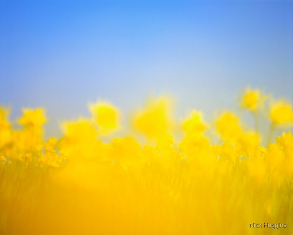 The Daffodil Army 1 by Nick Huggins
