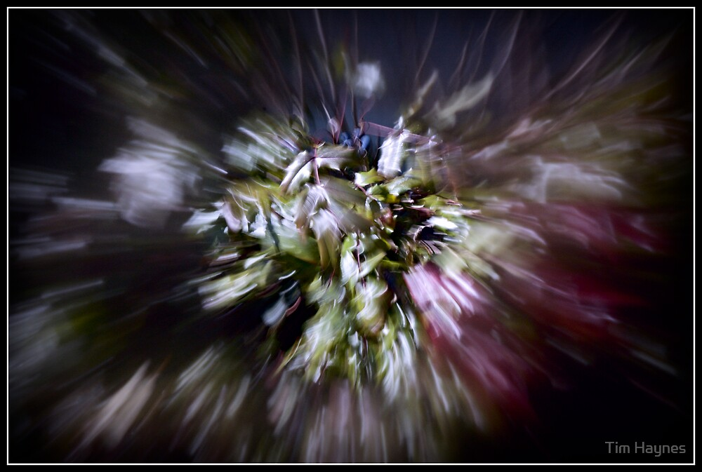 Abstract Mahonia by Tim Haynes