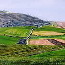 On the slopes of Cissbury Ring by Paula Oakley