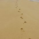 Footprints In The Sand by Sharon Brown