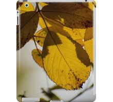 Autumn leaves on a tree iPad Case/Skin
