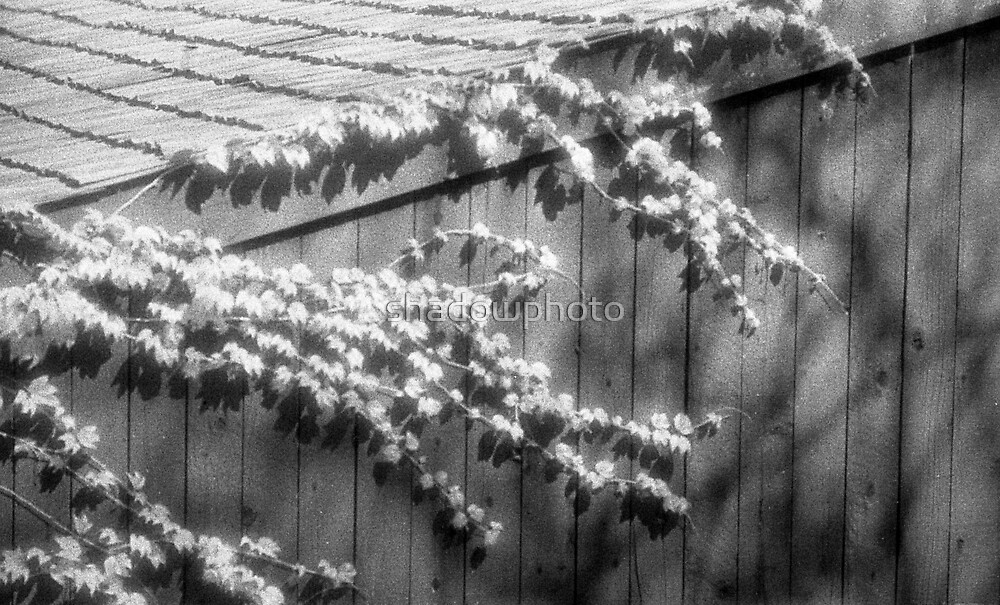 Infrared, 2007 by shadowphoto