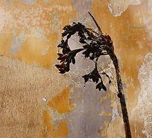 Weep Not For The Memories by Karen E Camilleri