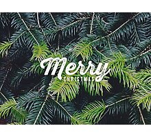 Christmas pine Photographic Print