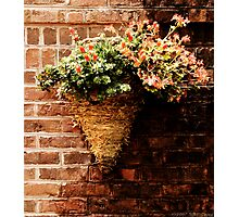 Flowers on a wall  Photographic Print